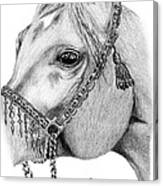 Arabian Halter Canvas Print