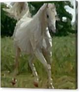 Arabian Horse Abstract Canvas Print