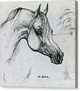 Arabian Horse Drawing 28 Canvas Print