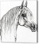 Arabian Horse Drawing 47 Canvas Print
