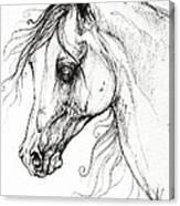 Arabian Horse Drawing 49 Canvas Print