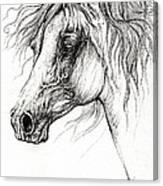 Arabian Horse Drawing 54 Canvas Print