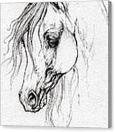 Arabian Horse Drawing Canvas Print