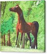 Arabian Horse In A Forest Clearing Canvas Print