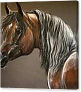 Arabian Mare Canvas Print