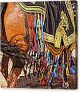 Arabian Native Show Canvas Print