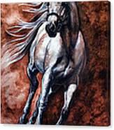Arabian Purebred Canvas Print
