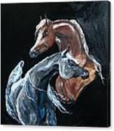 Arabians Canvas Print