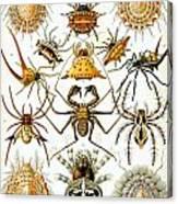 Arachnida Canvas Print
