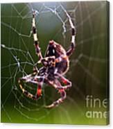 Arachnophobia Canvas Print