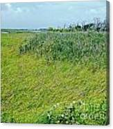 Aransas Nwr Coastal Grasses Canvas Print