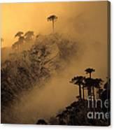 Araucaria Dawn Chile Canvas Print