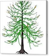 Araucaria Prehistoric Tree Canvas Print