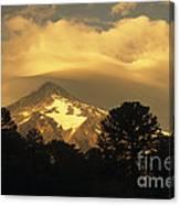 Araucarias At Sunset Canvas Print