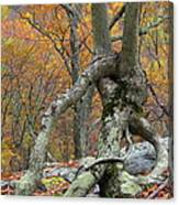 Arboreal Architecture Canvas Print