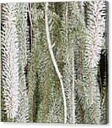 Arboretum Hoar Frost 2 Canvas Print