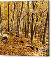 Arboretum Trail Canvas Print