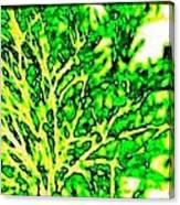 Arbres Verts Canvas Print