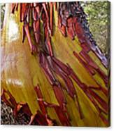 Arbutus Tree Trunk Canvas Print