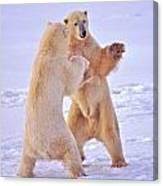 Arctic Dance Canvas Print