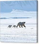 Arctic Family Canvas Print