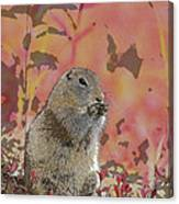 Arctic Ground Squirrel In Autumn Colors Abstract Canvas Print