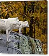 Arctic Wolf Pictures 930 Canvas Print