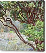Arctostaphylos Hybrid Canvas Print