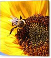 Are You Buzzing? Canvas Print
