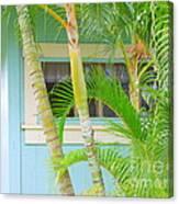 Areca Palms At The Window Canvas Print