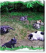 Argentina Cat Park Canvas Print