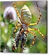 Argiope Spider And Grasshopper Vertical Canvas Print