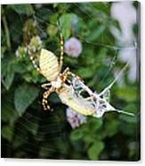 Argiope Spider Top Side Horizontal Canvas Print