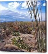 Arizona Afternoon Canvas Print