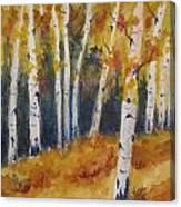Arizona Aspens Canvas Print