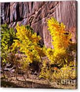 Arizona Autumn Colors Canvas Print