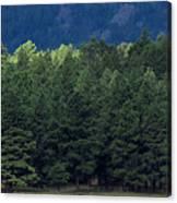 Arizona Forest Canvas Print