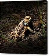 Arizona Horned Lizard Canvas Print
