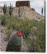 Arizona Icons Canvas Print