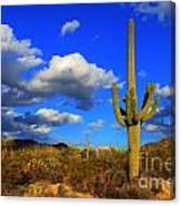 Arizona Landscape 2 Canvas Print