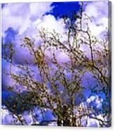 Arizona Mesa Through A Mesquite Tree Canvas Print