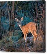 Arizona Deer Sunset Canvas Print