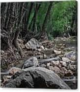 Arizona Riparian Flows Canvas Print