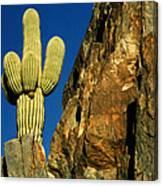 Arizona Sagauro Cactus Canvas Print