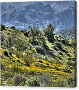 Arizona Spring Canvas Print