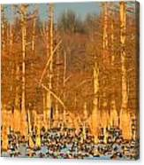 Arkansas Ducks Canvas Print