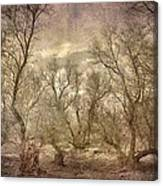 Arms Ghost Forest Canvas Print