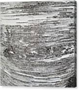 Around Birch Canvas Print