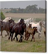 Arrington Ranch Herd - 2 Canvas Print