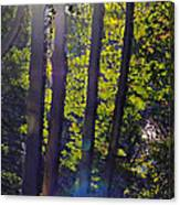 Art In The Woods Canvas Print